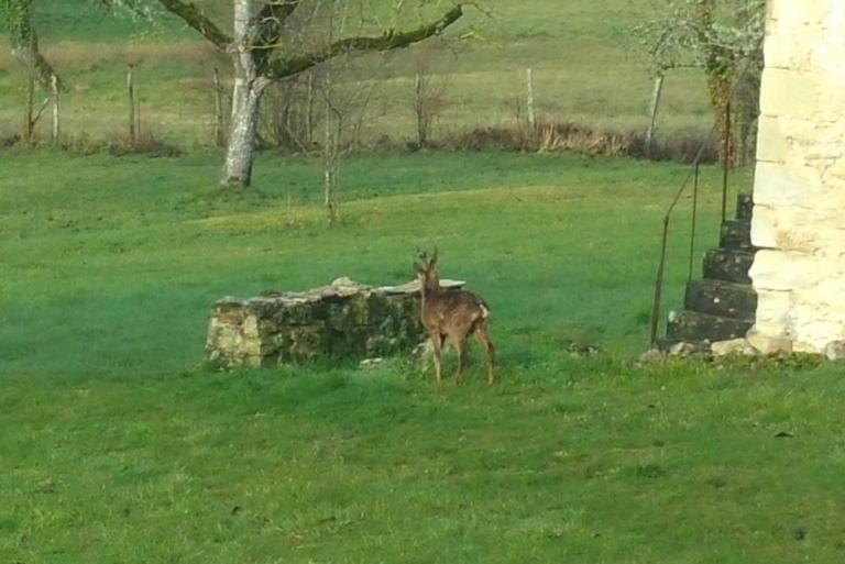 Un hôte dans le jardin