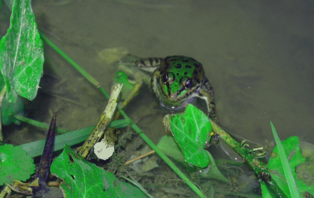 Reinette, frog's name !