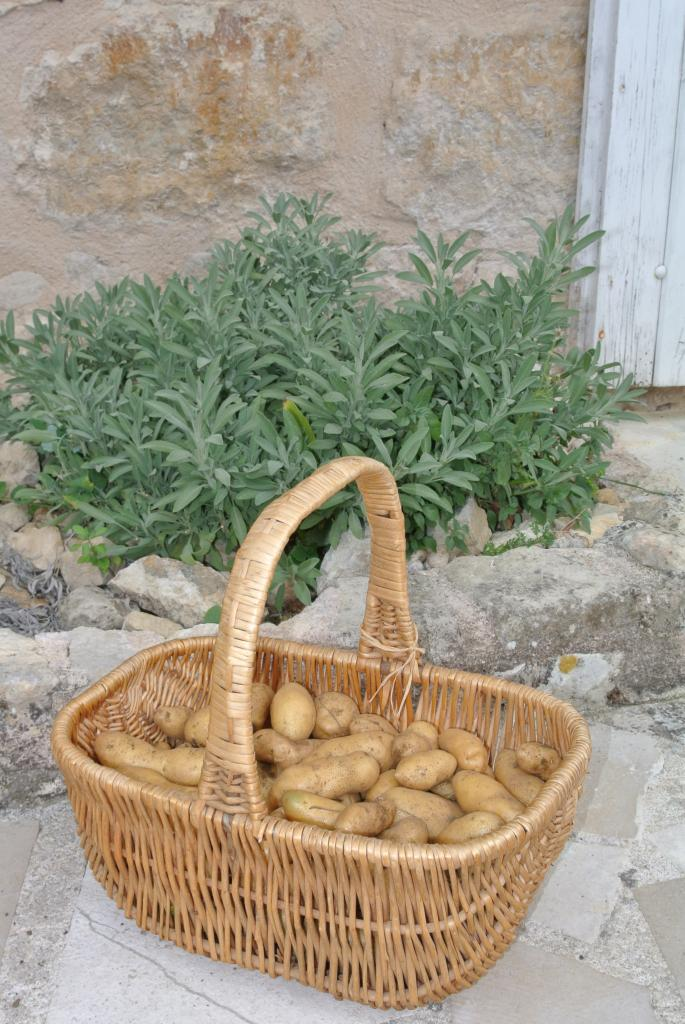 Potatoes from uour Garden