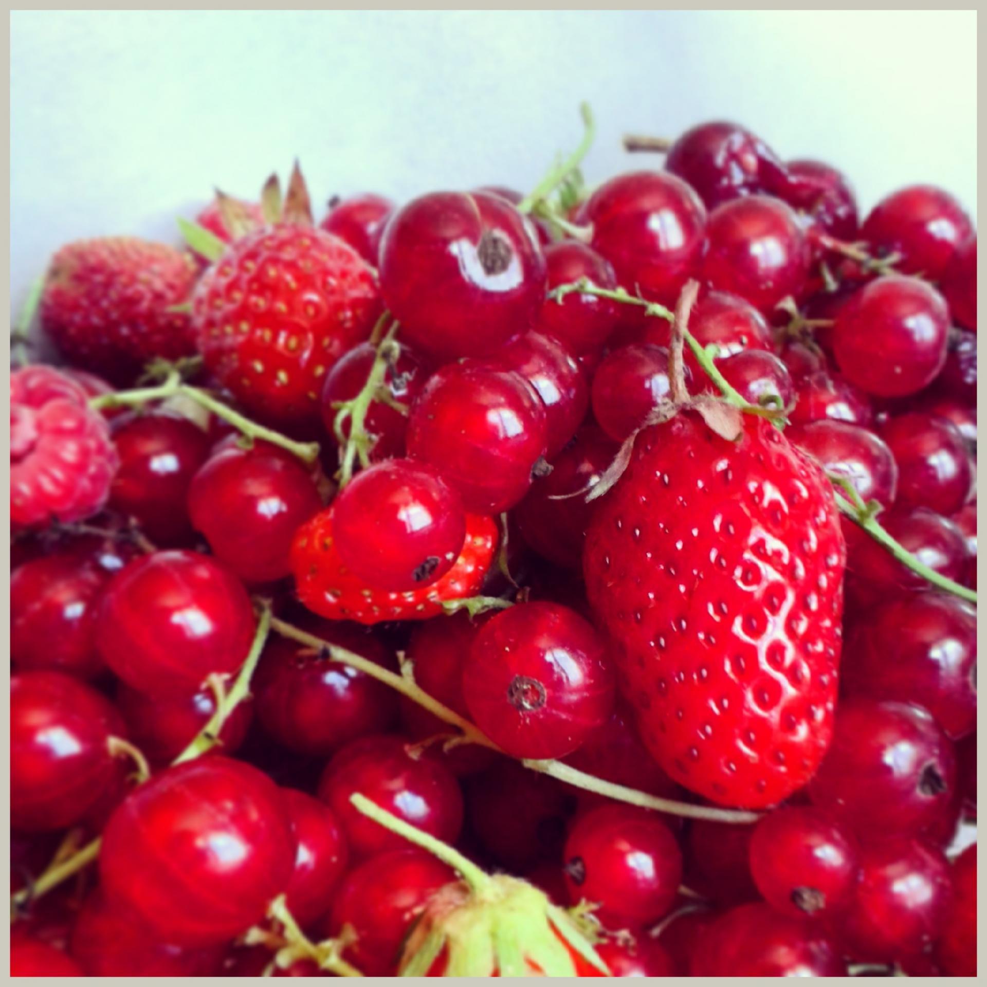 Les fruits du jardin pour le diner