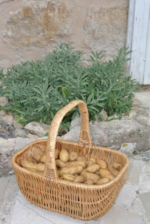 Pommes de terre grenailles du jardin
