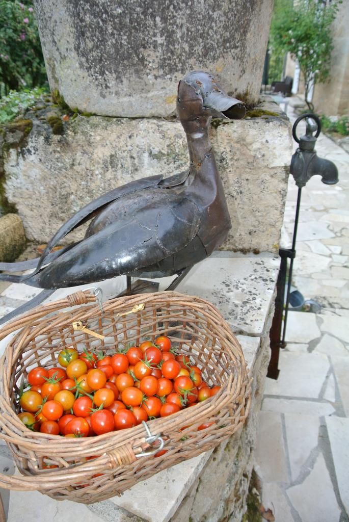 Cherry tomatoes Organic from my garden - Bed and Breakfast Dordogne