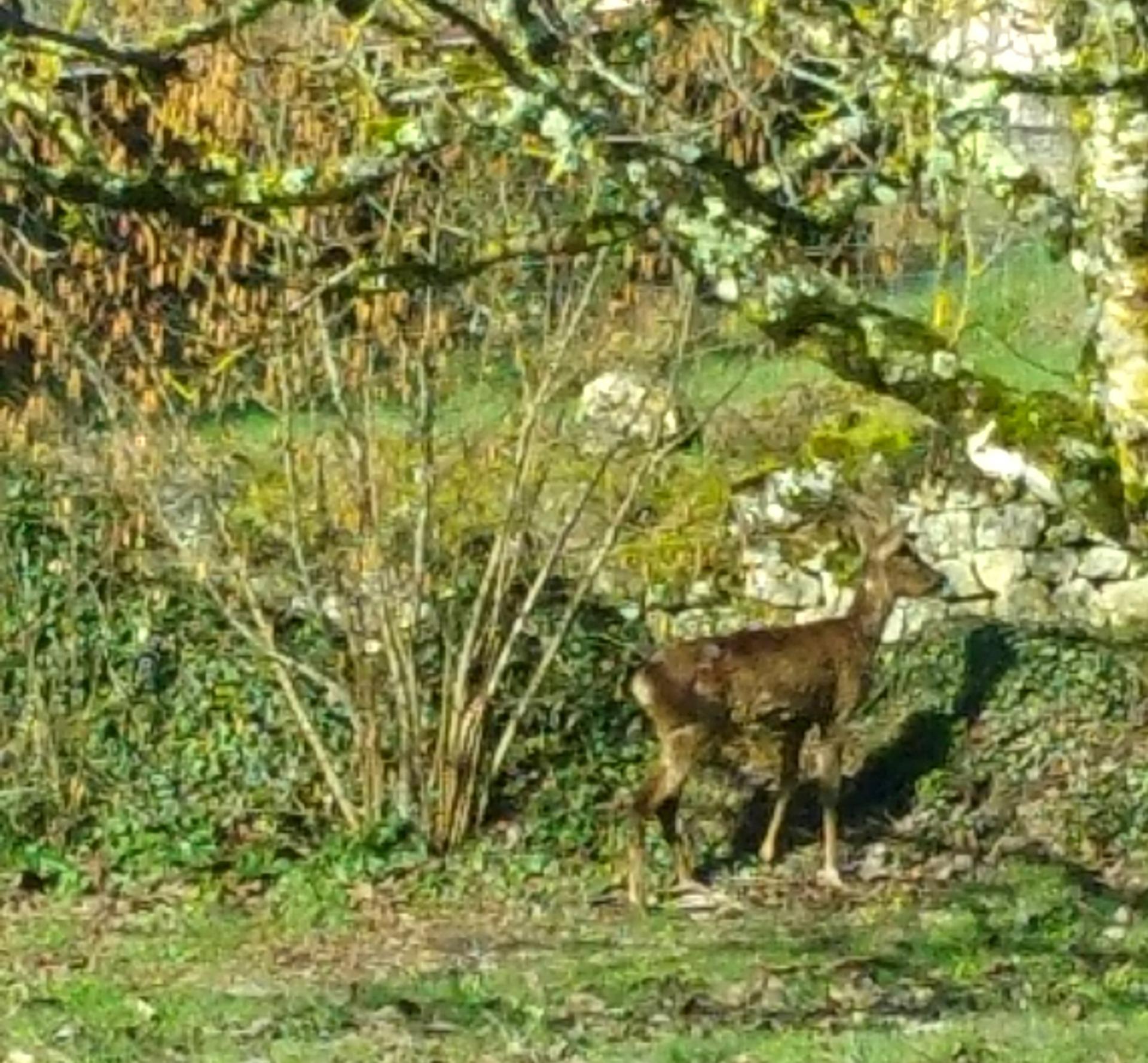 Un invité dans notre jardin